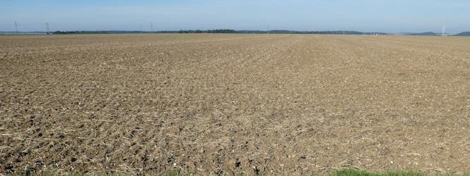 picardy-field