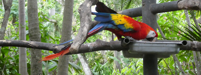 scarlet macaw feature
