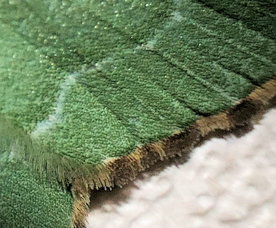 P1000067 emerald wing edge