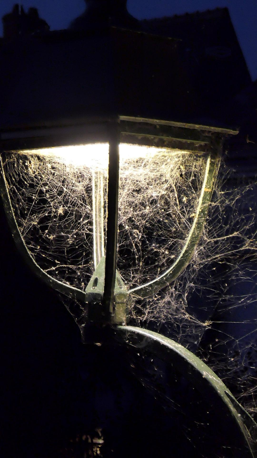 spiderwebs amboise