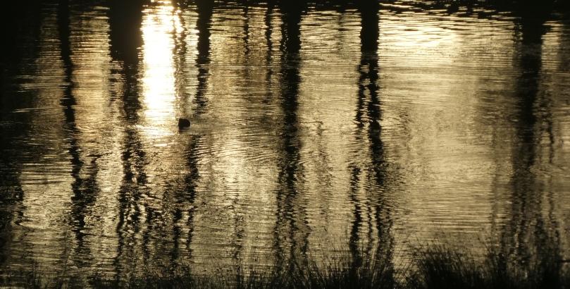 low sun on melchett mere