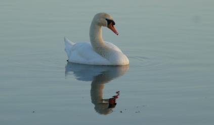 melchett swan