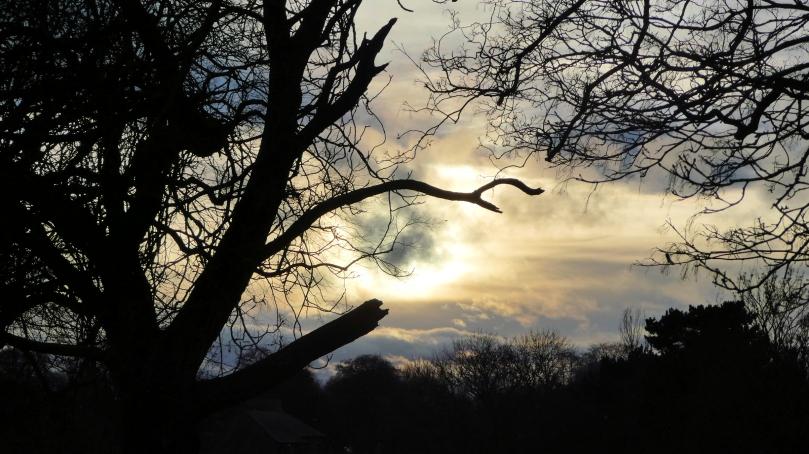 31jan severed limbs on tree
