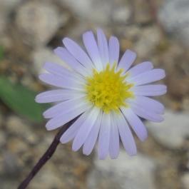 bush flower 3