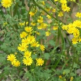bush flower 6