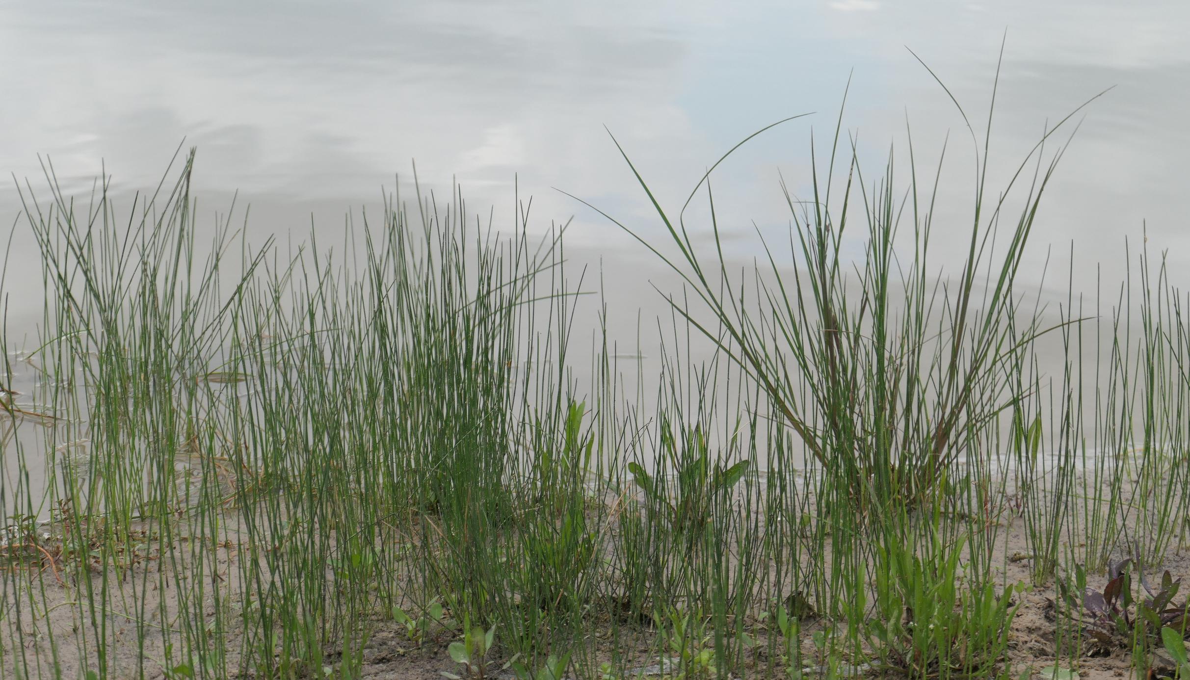 bush grasses
