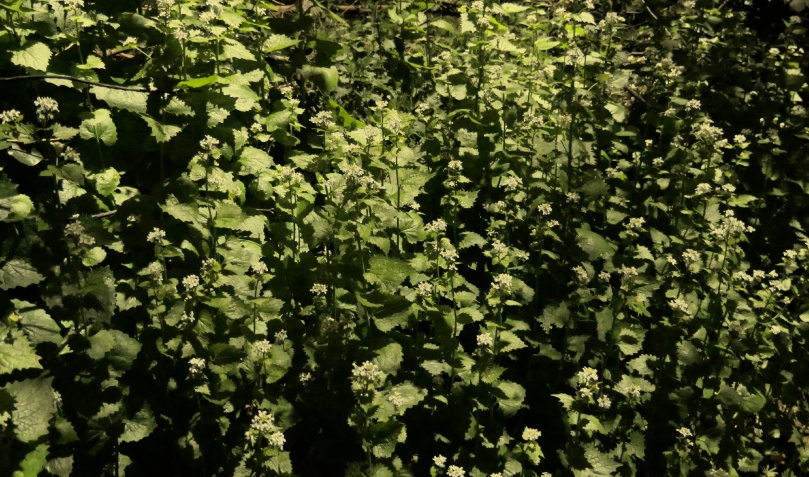 nettles by streetlight