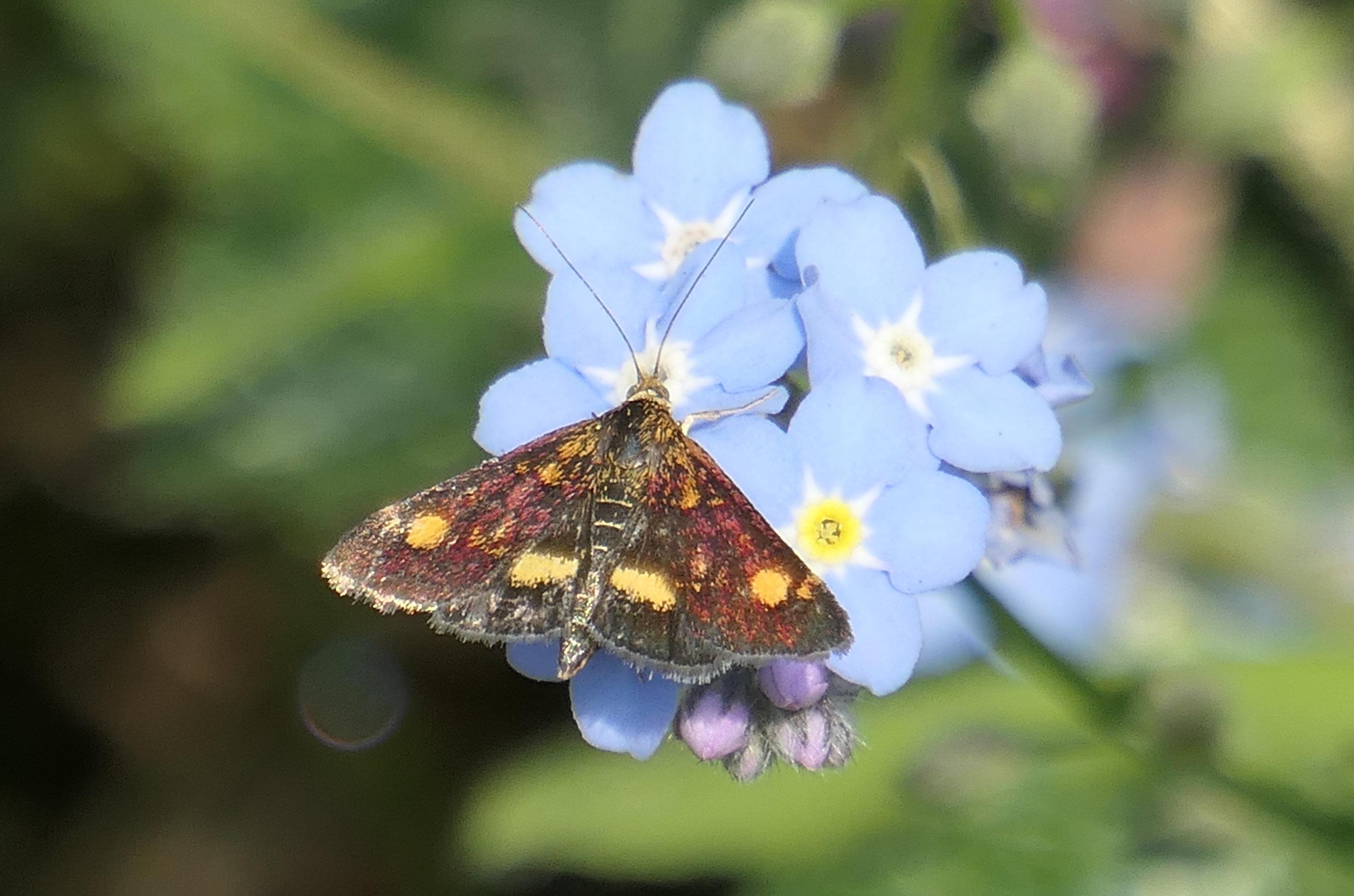 mint moth 2